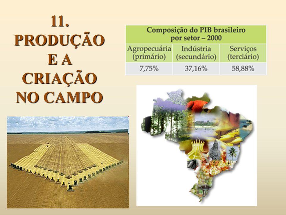 11. PRODUÇÃO E A CRIAÇÃO NO CAMPO