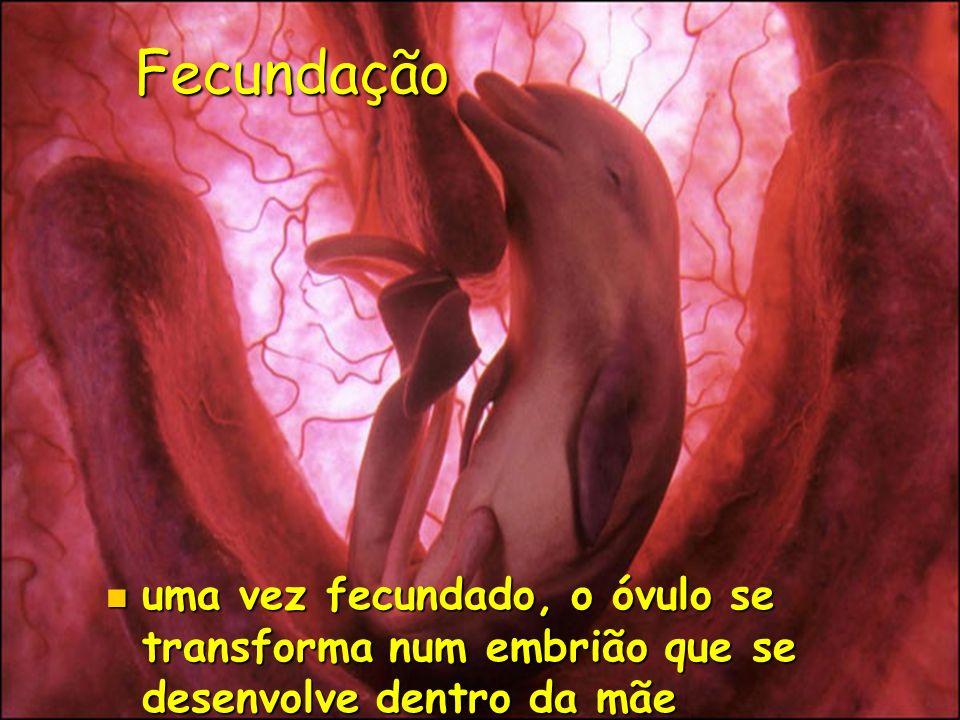Fecundação uma vez fecundado, o óvulo se transforma num embrião que se desenvolve dentro da mãe uma vez fecundado, o óvulo se transforma num embrião q