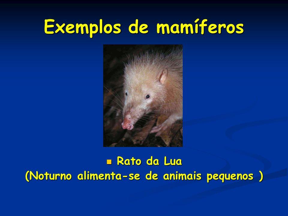 Exemplos de mamíferos Rato da Lua Rato da Lua (Noturno alimenta-se de animais pequenos )