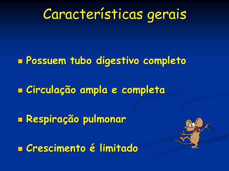Características gerais Possuem tubo digestivo completo Possuem tubo digestivo completo Circulação ampla e completa Circulação ampla e completa Respira