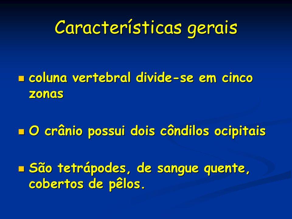 Características gerais coluna vertebral divide-se em cinco zonas coluna vertebral divide-se em cinco zonas O crânio possui dois côndilos ocipitais O c