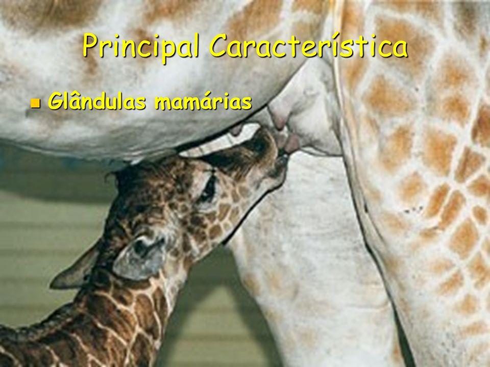 Classes e ordens Classe: Mammalia Classe: Mammalia Ordens: Ordens: Xenarthra (Tamanduá-bandeira ) Xenarthra (Tamanduá-bandeira ) Carnívora ( Leao ) Carnívora ( Leao ) Marsupialia (Gambá-de-orelha-branca ) Marsupialia (Gambá-de-orelha-branca ) Rodentia (Porco-espinho ) Rodentia (Porco-espinho ) Artiodátyla (Cervo-do-pantanal ) Artiodátyla (Cervo-do-pantanal ) Perissodátyla (Anta ) Perissodátyla (Anta ) Cetácea (Baleia-jubarte ) Cetácea (Baleia-jubarte ) Sirenia (Peixe-boi ) Sirenia (Peixe-boi ) Lagomorpha (lebre ) Lagomorpha (lebre ) Primata (Macaco-Guigó ) Primata (Macaco-Guigó )