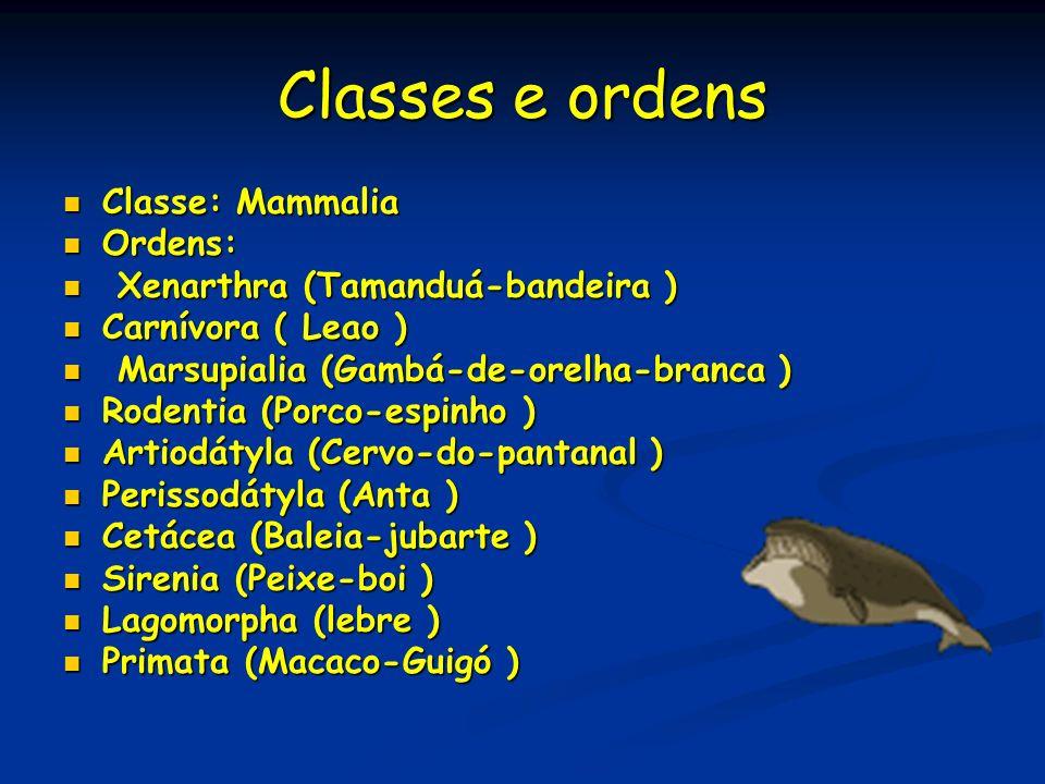 Classes e ordens Classe: Mammalia Classe: Mammalia Ordens: Ordens: Xenarthra (Tamanduá-bandeira ) Xenarthra (Tamanduá-bandeira ) Carnívora ( Leao ) Ca