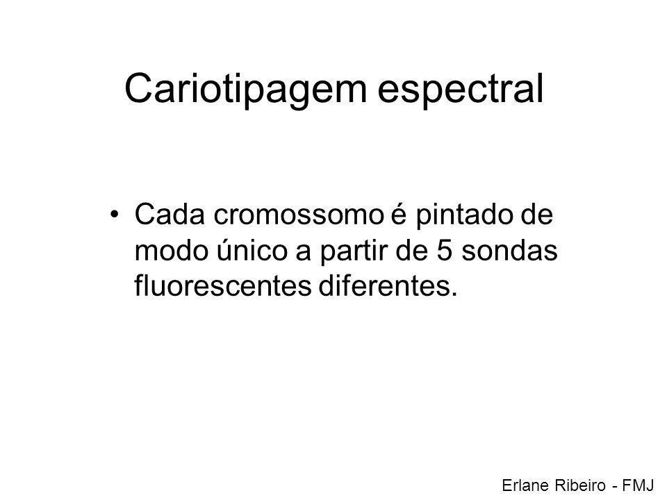 Cariotipagem espectral Cada cromossomo é pintado de modo único a partir de 5 sondas fluorescentes diferentes. Erlane Ribeiro - FMJ