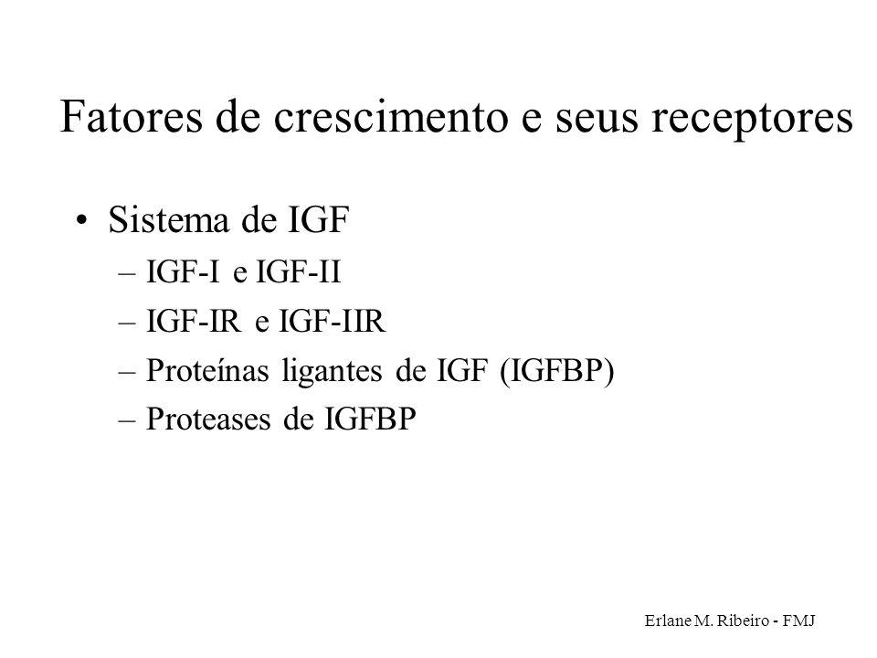 Erlane M. Ribeiro - FMJ Fatores de crescimento e seus receptores Sistema de IGF –IGF-I e IGF-II –IGF-IR e IGF-IIR –Proteínas ligantes de IGF (IGFBP) –
