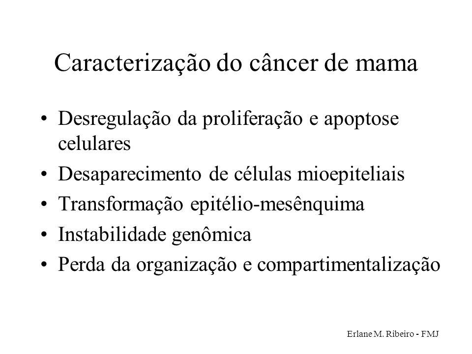 Erlane M. Ribeiro - FMJ Caracterização do câncer de mama Desregulação da proliferação e apoptose celulares Desaparecimento de células mioepiteliais Tr