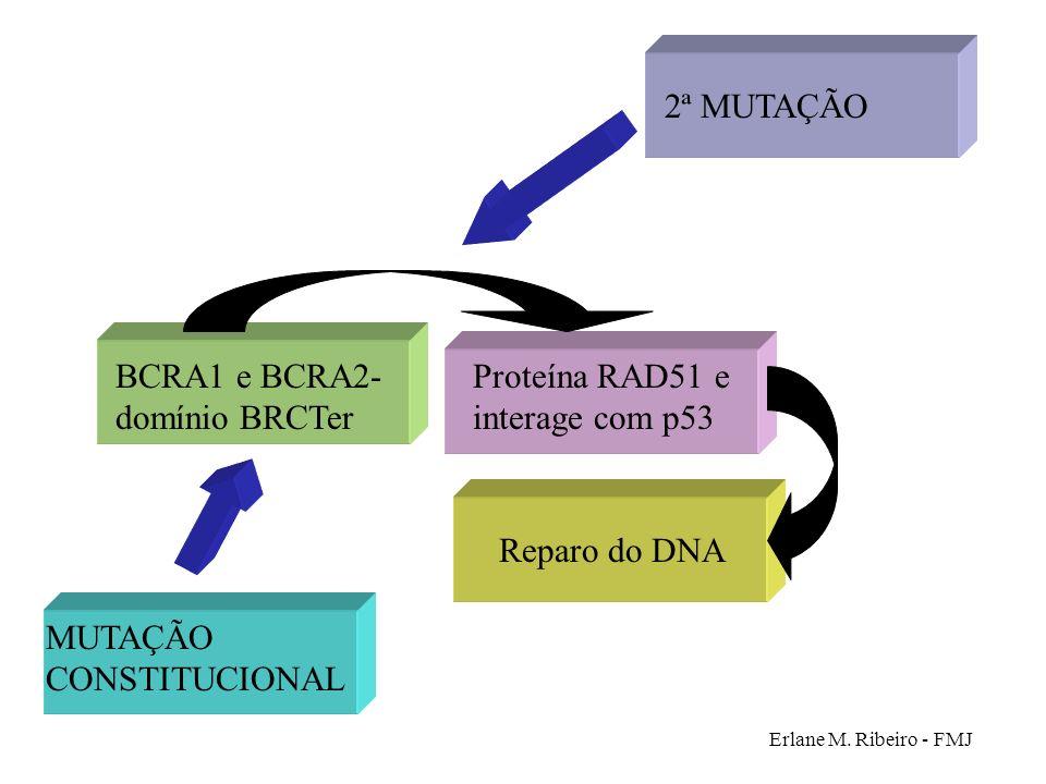 Erlane M. Ribeiro - FMJ BCRA1 e BCRA2- domínio BRCTer Proteína RAD51 e interage com p53 Reparo do DNA 2ª MUTAÇÃO MUTAÇÃO CONSTITUCIONAL