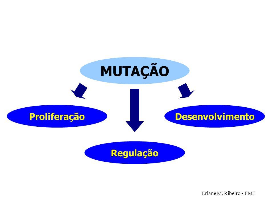 Erlane M. Ribeiro - FMJ Desenvolvimento MUTAÇÃO Regulação Proliferação