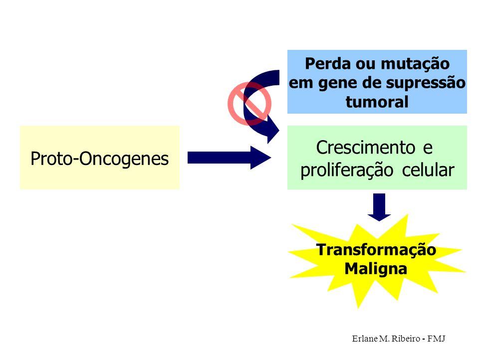 Erlane M. Ribeiro - FMJ Proto-Oncogenes Crescimento e proliferação celular Transformação Maligna Perda ou mutação em gene de supressão tumoral