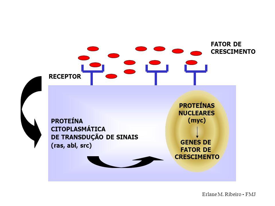 Erlane M. Ribeiro - FMJ PROTEÍNA CITOPLASMÁTICA DE TRANSDUÇÃO DE SINAIS (ras, abl, src) RECEPTOR FATOR DE CRESCIMENTO PROTEÍNAS NUCLEARES (myc) GENES