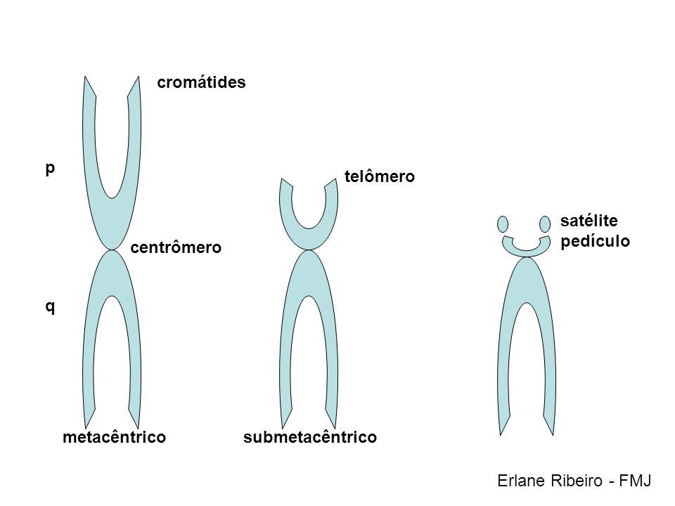 cromátides metacêntricosubmetacêntrico telômero satélite pedículo p q centrômero Erlane Ribeiro - FMJ