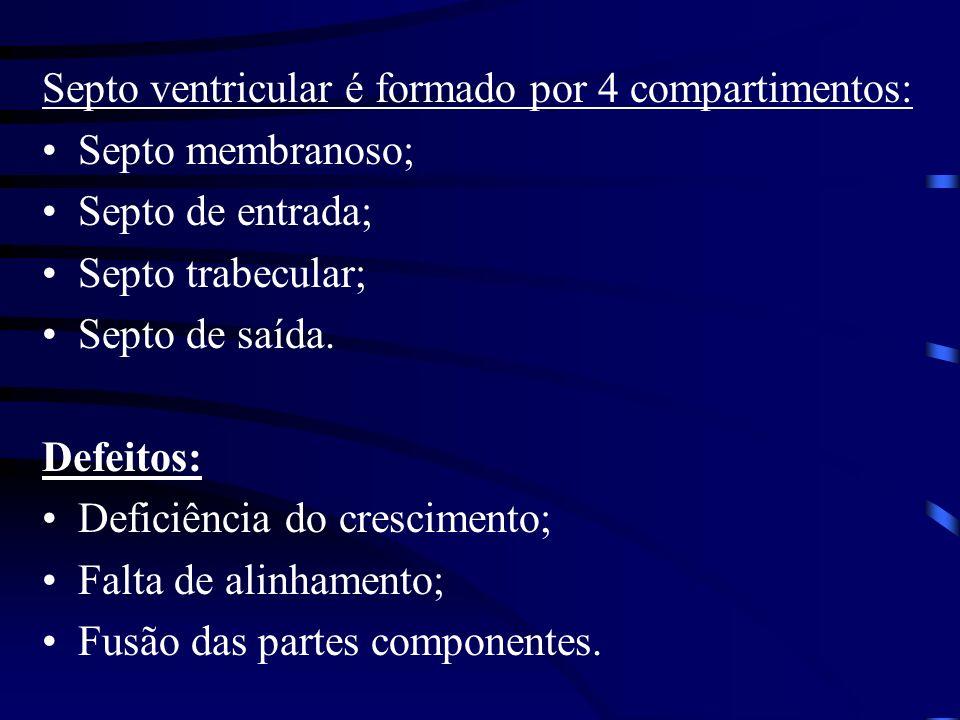 Septo ventricular é formado por 4 compartimentos: Septo membranoso; Septo de entrada; Septo trabecular; Septo de saída.