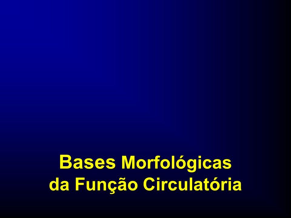 Bases Morfológicas da Função Circulatória