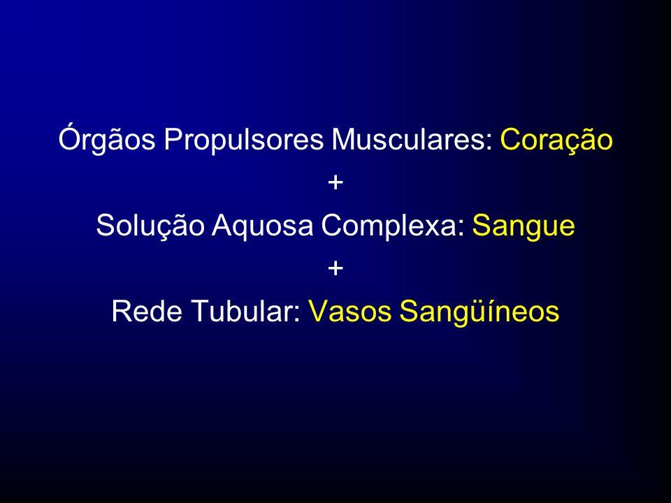 Células do Sangue Volume Total de Sangue: 5,5 L Plasma e Glóbulos Plaquetas Eritrócitos Leucócitos