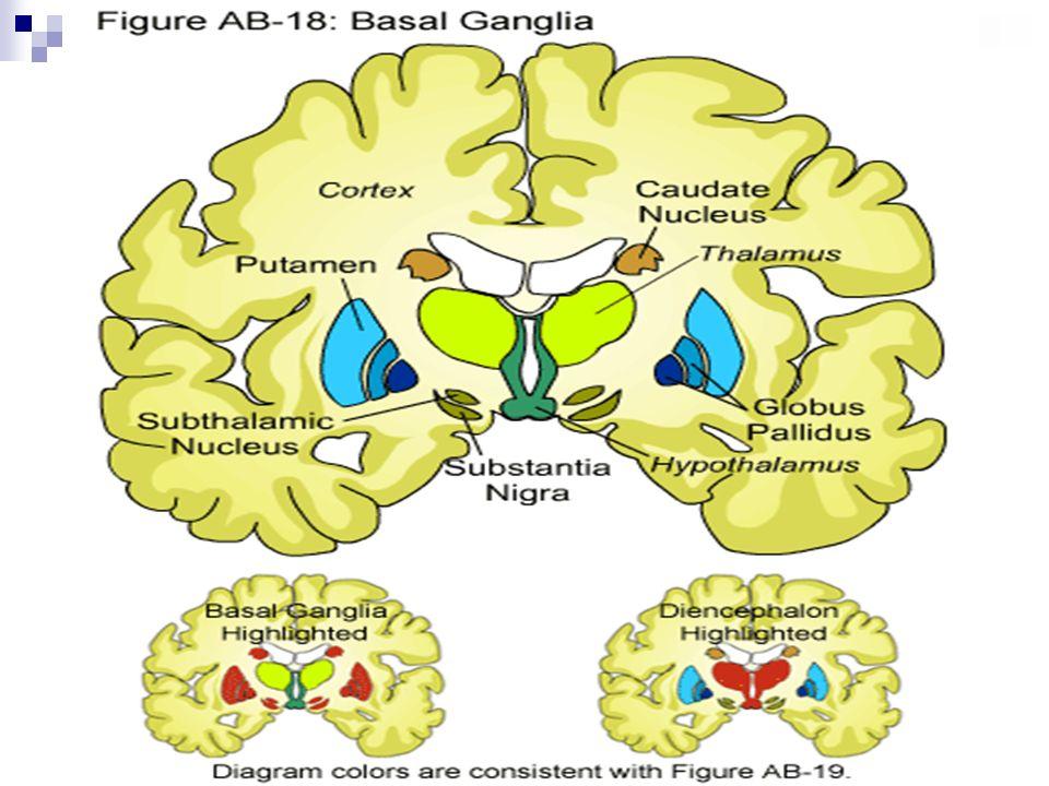 Tratamento Medicamentoso Anticolinérgicos (Artane, Akineton): reduzem ação colinérgica, principalmente, nos tremores e rigidez muscular.