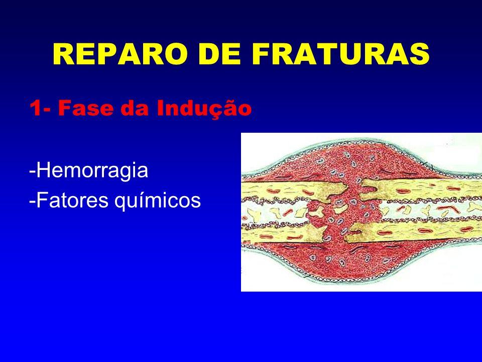 2- Fase Inflamatória -Hematoma e coágulo -Necrose celular -Granulação (fibroblastos) REPARO DE FRATURAS