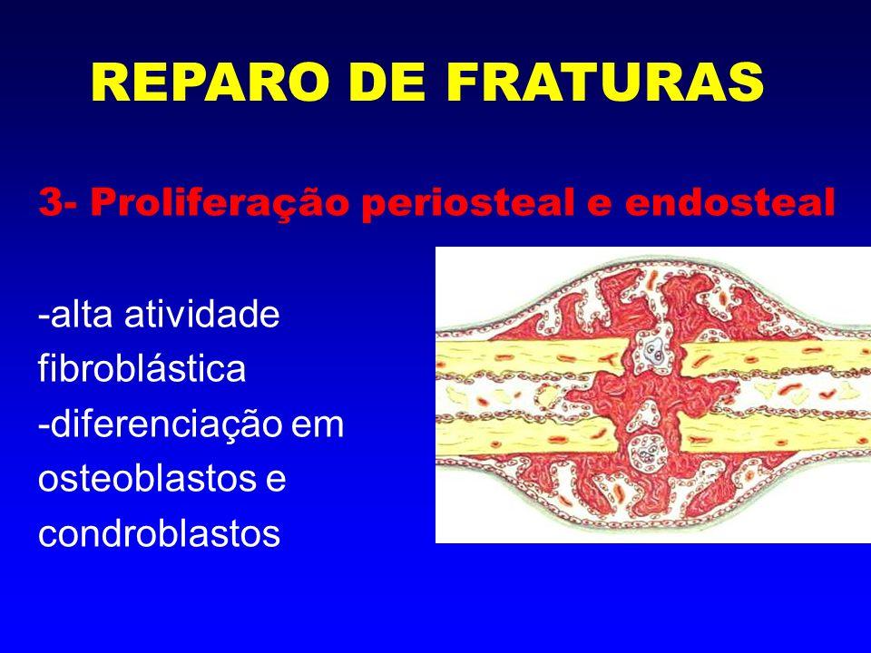 4- Estágio de Calo ósseo (calo mole) -invasão vascular -tecido fibrocartilaginoso -calcificação progressiva REPARO DE FRATURAS