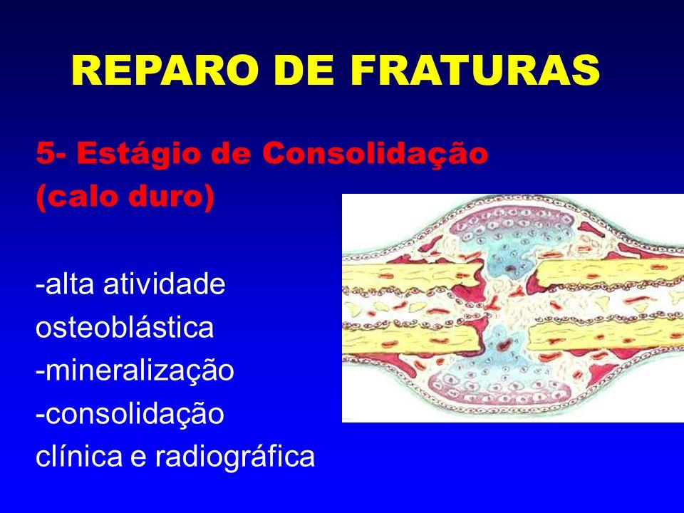 REPARO DE FRATURAS