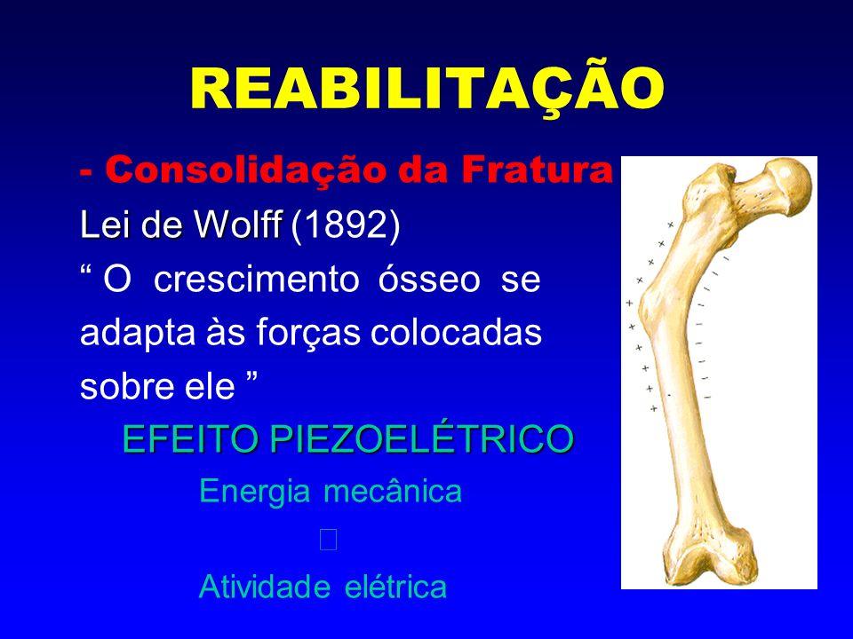 REABILITAÇÃO - Consolidação da Fratura ação de cargas mecânicas: - sobrecargas gravitacionais - sustentação de peso - compressões articulares - movimentação - contração muscular * dependendo do calo ósseo