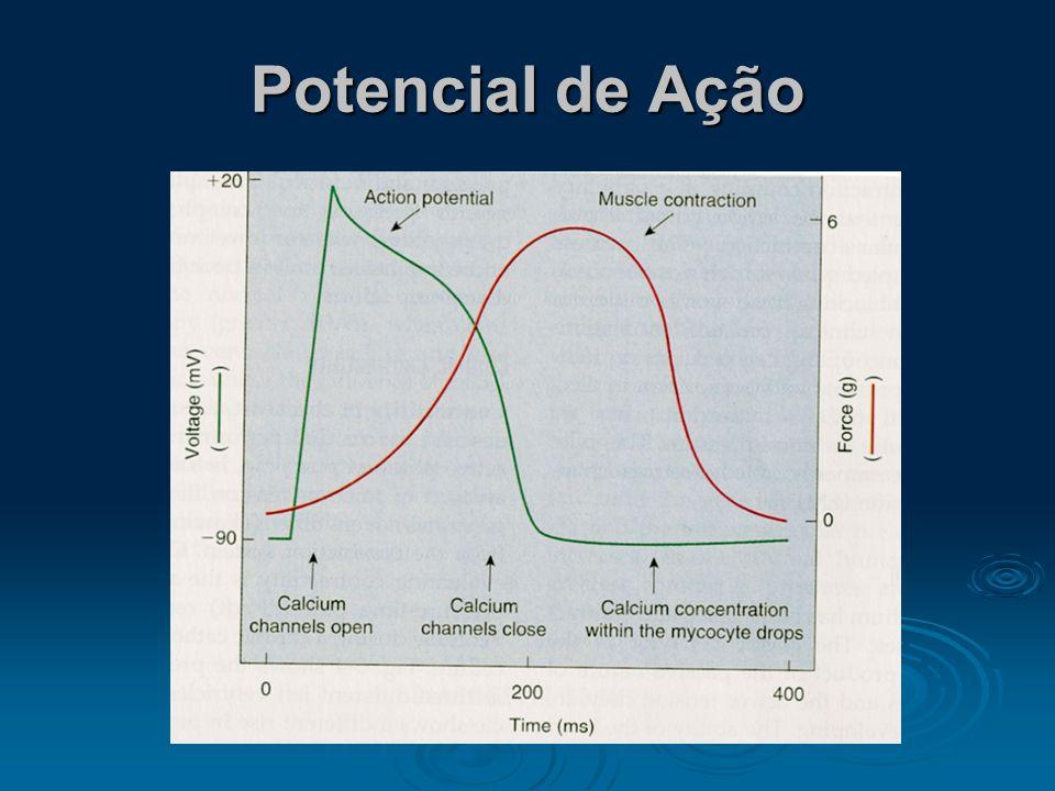 Ciclo Cardíaco 1. Potencial de Repouso: -85 a –95 mV 2. Potencial de Ação: + 105 mV (Overshoot) 3. Platô: 15 x 4. Tempo: Atrial (0,2s) Ventricular (0,