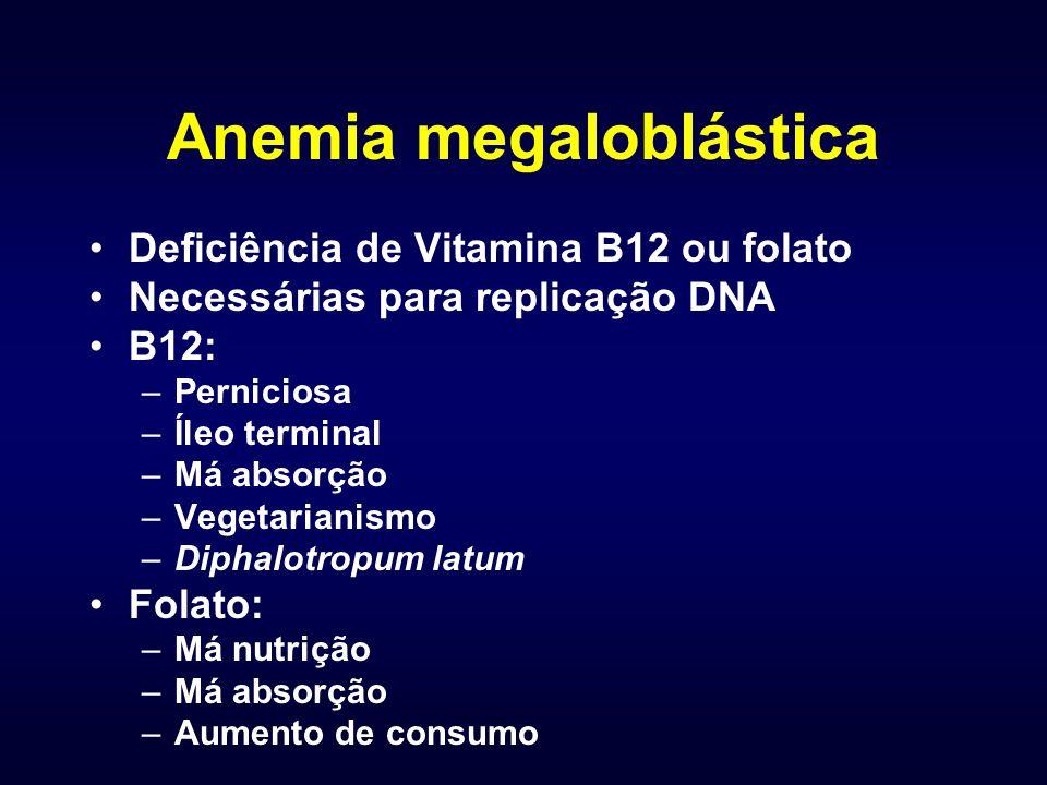 Anemia megaloblástica Deficiência de Vitamina B12 ou folato Necessárias para replicação DNA B12: –Perniciosa –Íleo terminal –Má absorção –Vegetarianismo –Diphalotropum latum Folato: –Má nutrição –Má absorção –Aumento de consumo