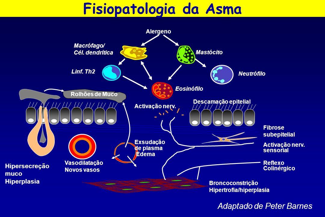 Hipersecreção muco Hiperplasia Eosinófilo Mastócito Alergeno Linf. Th2 Vasodilatação Novos vasos Exsudação de plasma Edema Neutrófilo Rolhões de Muco