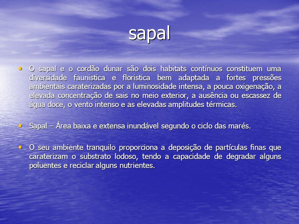 sapal O sapal e o cordão dunar são dois habitats contínuos constituem uma diversidade faunistica e floristica bem adaptada a fortes pressões ambientai
