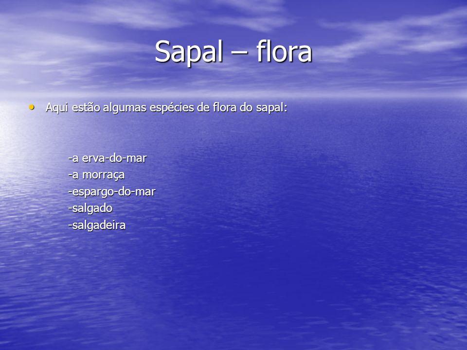 Sapal – flora Aqui estão algumas espécies de flora do sapal: Aqui estão algumas espécies de flora do sapal: -a erva-do-mar -a erva-do-mar -a morraça -