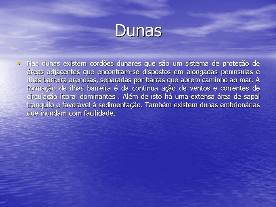 Dunas Nas dunas existem cordões dunares que são um sistema de proteção de áreas adjacentes que encontram-se dispostos em alongadas penínsulas e ilhas
