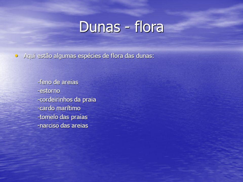 Dunas - flora Aqui estão algumas espécies de flora das dunas: Aqui estão algumas espécies de flora das dunas: -feno de areias -feno de areias -estorno