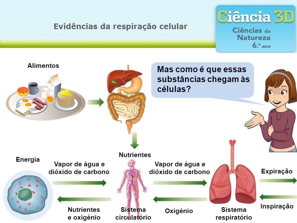 Evidências da respiração celular Mas como é que essas substâncias chegam às células? Alimentos Nutrientes Energia Vapor de água e dióxido de carbono N