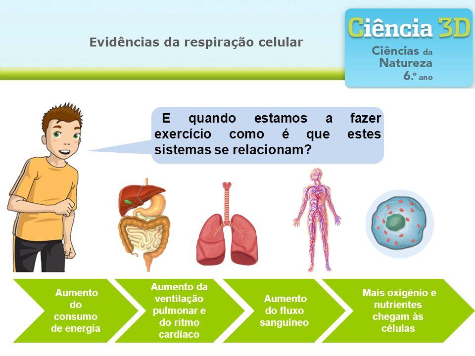 Evidências da respiração celular Para além da actividade física, quais são os outros fatores que afetam as necessidades energéticas?