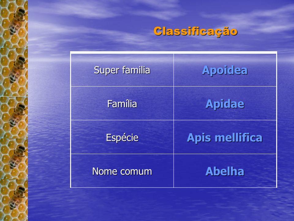 Super família Apoidea FamíliaApidae Espécie Apis Mellifera Classificação Classificação Super familia ApoideaFamíliaApidae Espécie Apis mellifica Nome