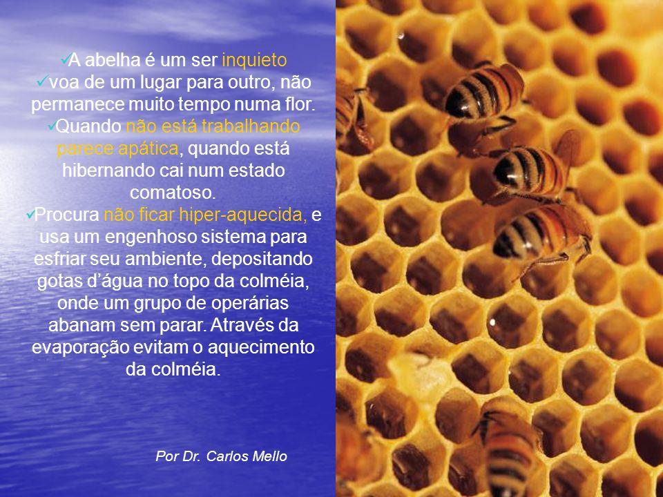 A abelha é um ser inquieto voa de um lugar para outro, não permanece muito tempo numa flor. Quando não está trabalhando parece apática, quando está hi