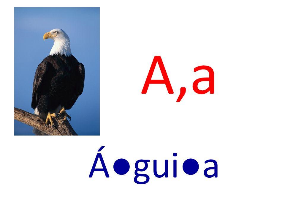 A,a Águia