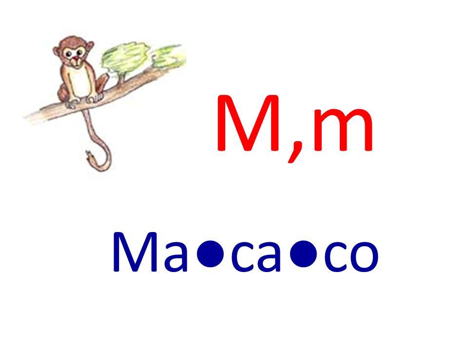 M,m Macaco