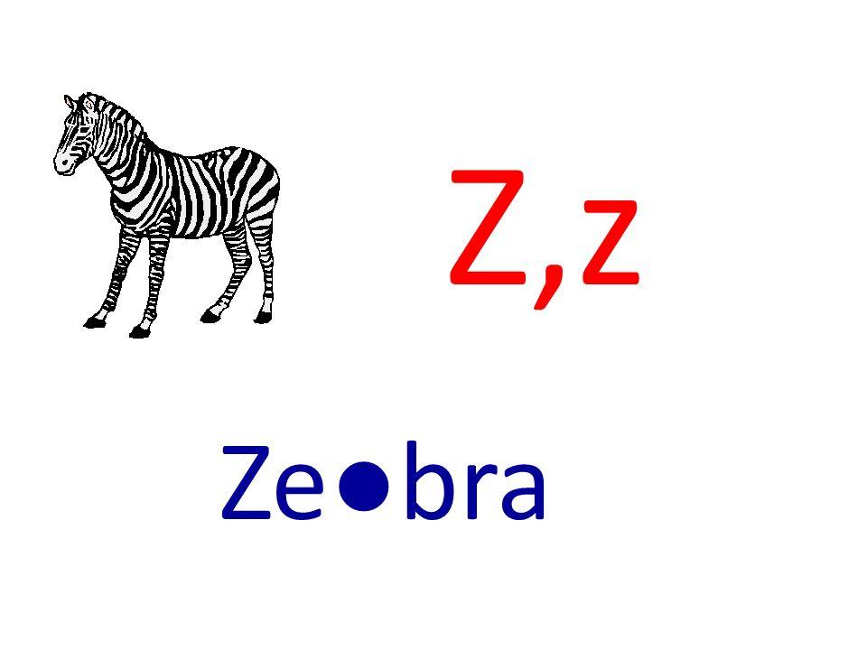 Z,z Zebra