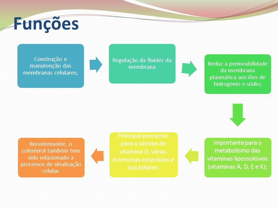 Funções Construção e manutenção das membranas celulares; Regulação da fluidez da membrana Reduz a permeabilidade da membrana plasmática aos iões de hi