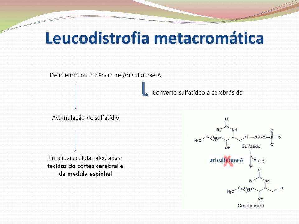 Leucodistrofia metacromática Deficiência ou ausência de Arilsulfatase A Acumulação de sulfatídio Converte sulfatídeo a cerebrósido Principais células
