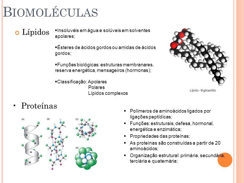 B IOMOLÉCULAS Lípidos Insoluvéis em água e solúveis em solventes apolares; Ésteres de ácidos gordos ou amidas de ácidos gordos; Funções biológicas: es