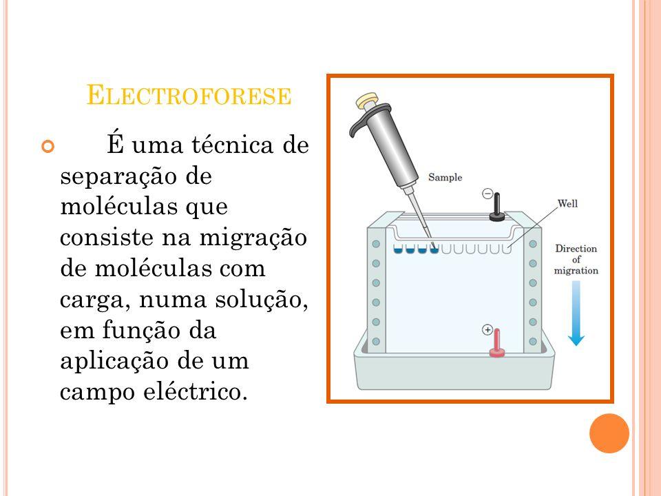 E LECTROFORESE É uma técnica de separação de moléculas que consiste na migração de moléculas com carga, numa solução, em função da aplicação de um cam