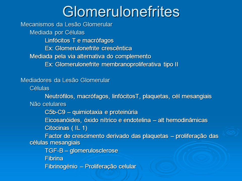 Glomerulonefrites Mecanismos da Lesão Glomerular Mediada por Células Linfócitos T e macrófagos Ex: Glomerulonefrite crescêntica Mediada pela via alter