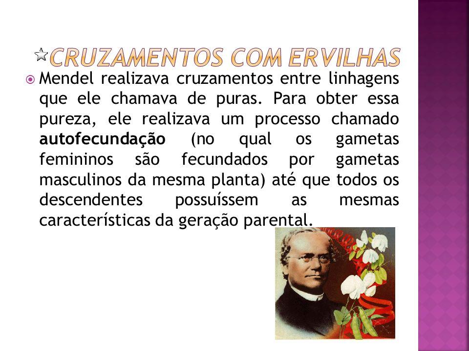 Mendel realizava cruzamentos entre linhagens que ele chamava de puras. Para obter essa pureza, ele realizava um processo chamado autofecundação (no qu