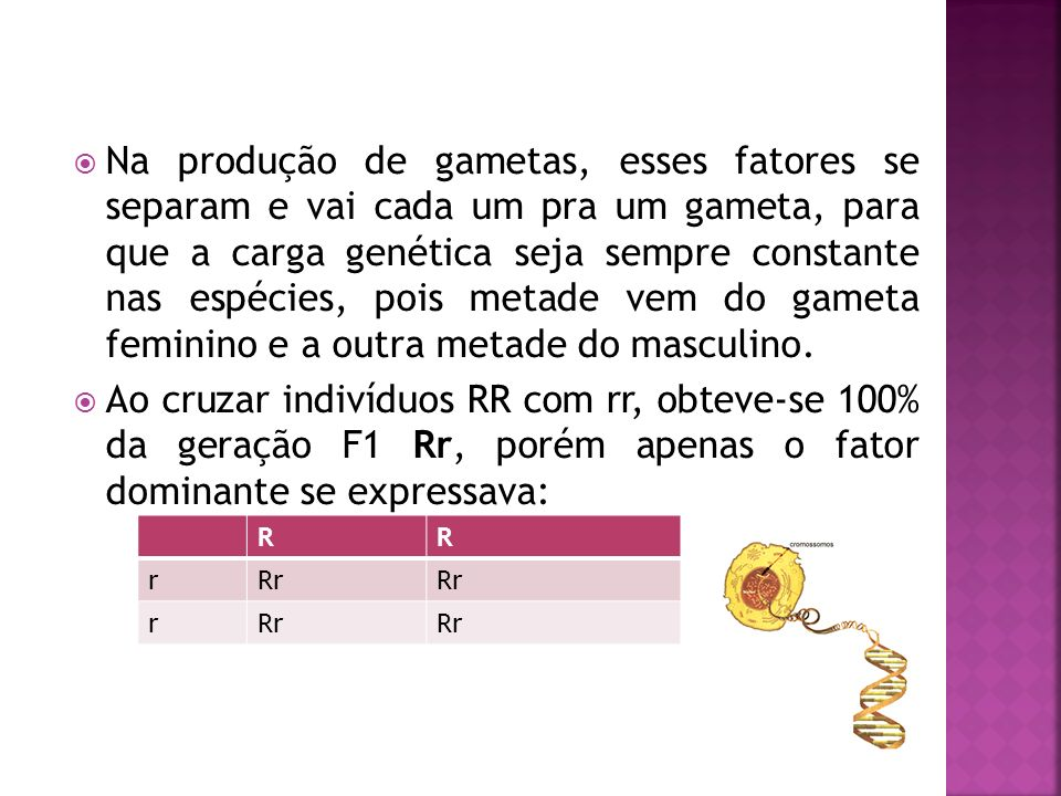 E ao cruzar os híbridos da geração F1, 3/4 dos indivíduos eram dominantes e 1/4 eram recessivos: Rr RRRRr r rr