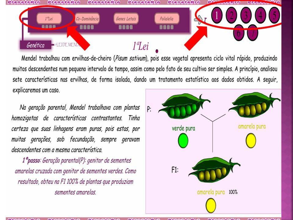 Professora Leila Rosana Bolonhin Ciências e Biologia leila_bol@hotmail.com www.biologiahoje.wikispaces.com