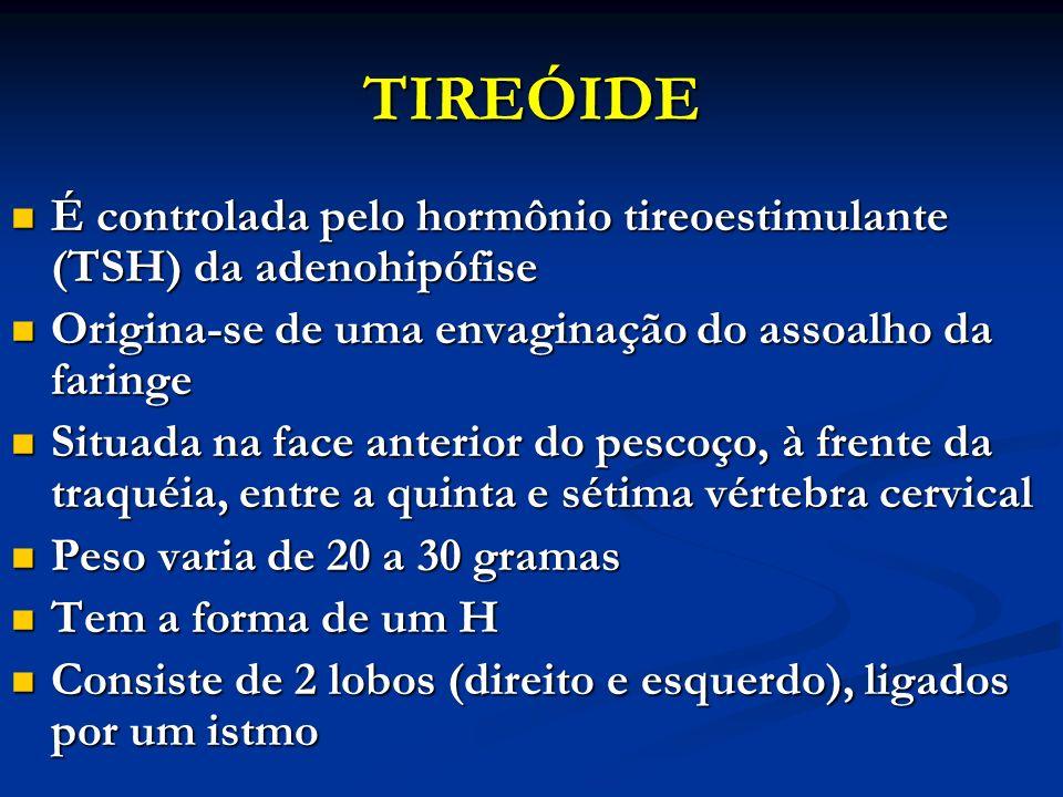 TIREÓIDE É controlada pelo hormônio tireoestimulante (TSH) da adenohipófise É controlada pelo hormônio tireoestimulante (TSH) da adenohipófise Origina