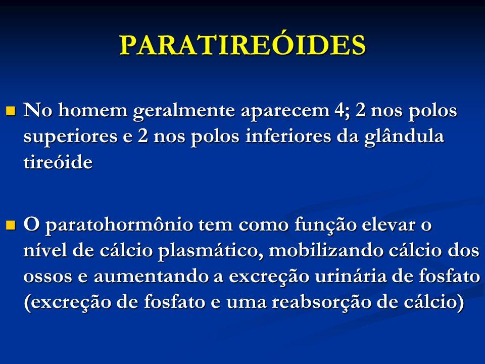 PARATIREÓIDES No homem geralmente aparecem 4; 2 nos polos superiores e 2 nos polos inferiores da glândula tireóide No homem geralmente aparecem 4; 2 n