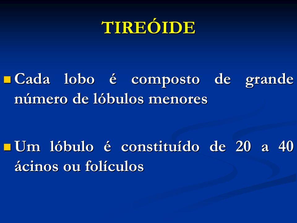 TIREÓIDE Cada lobo é composto de grande número de lóbulos menores Cada lobo é composto de grande número de lóbulos menores Um lóbulo é constituído de