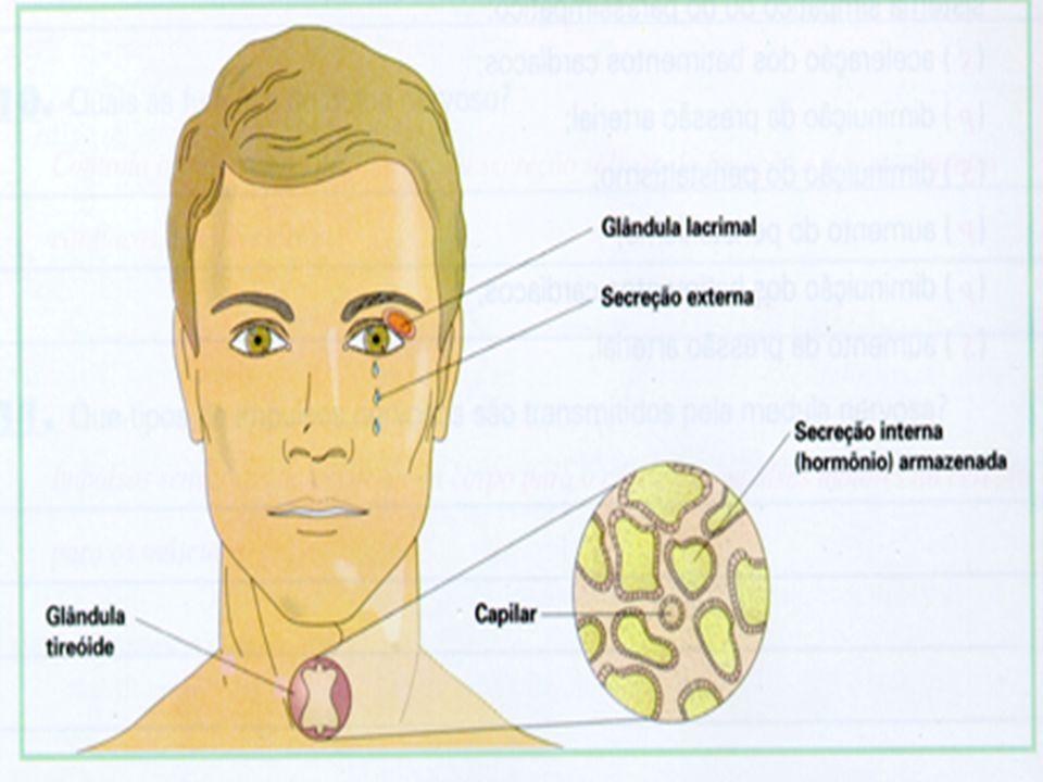 TIREÓIDE É uma glândula endócrina que contém hormônios É uma glândula endócrina que contém hormônios tireoideanos tireoideanos Ações principais dos hormônios tireoideanos Ações principais dos hormônios tireoideanos Aumentam a proporção de oxidação intra-celular Aumentam a proporção de oxidação intra-celular São essenciais para atingir a idade adulta São essenciais para atingir a idade adulta Influenciam o metabolismo eletrolítico, o protéico e o dos glicídios Influenciam o metabolismo eletrolítico, o protéico e o dos glicídios São essenciais para o desenvolvimento normal São essenciais para o desenvolvimento normal Controlam a irritabilidade do Sistema Nervoso Controlam a irritabilidade do Sistema Nervoso Aumentam a freqüência cardíaca Aumentam a freqüência cardíaca