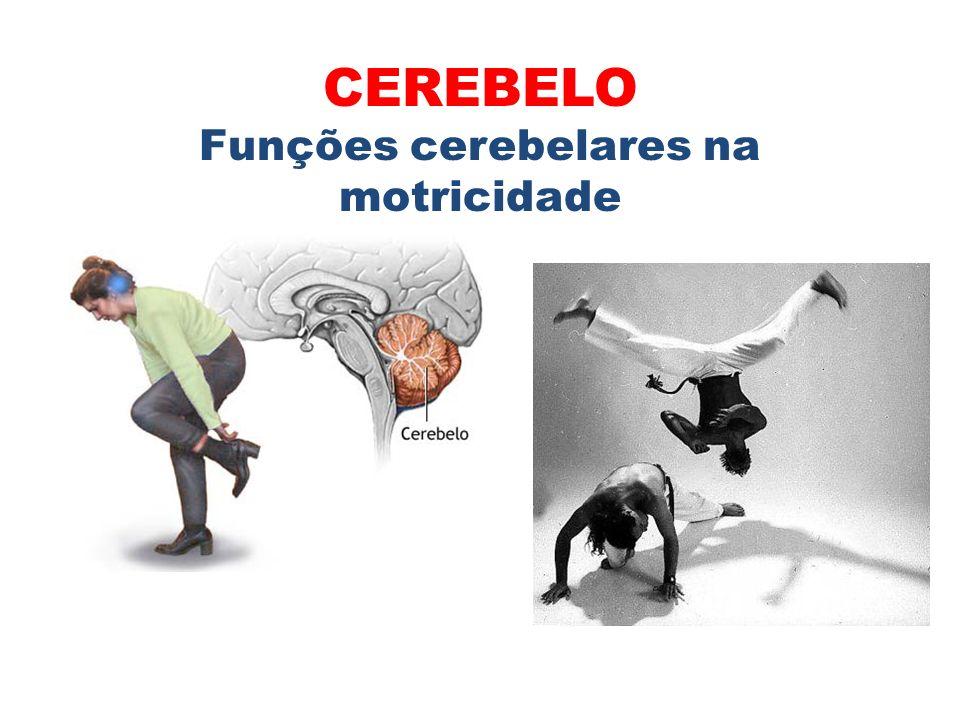 1.Coordenação dos movimentos voluntários; 2.Manutenção do equilíbrio e da postura; 3.